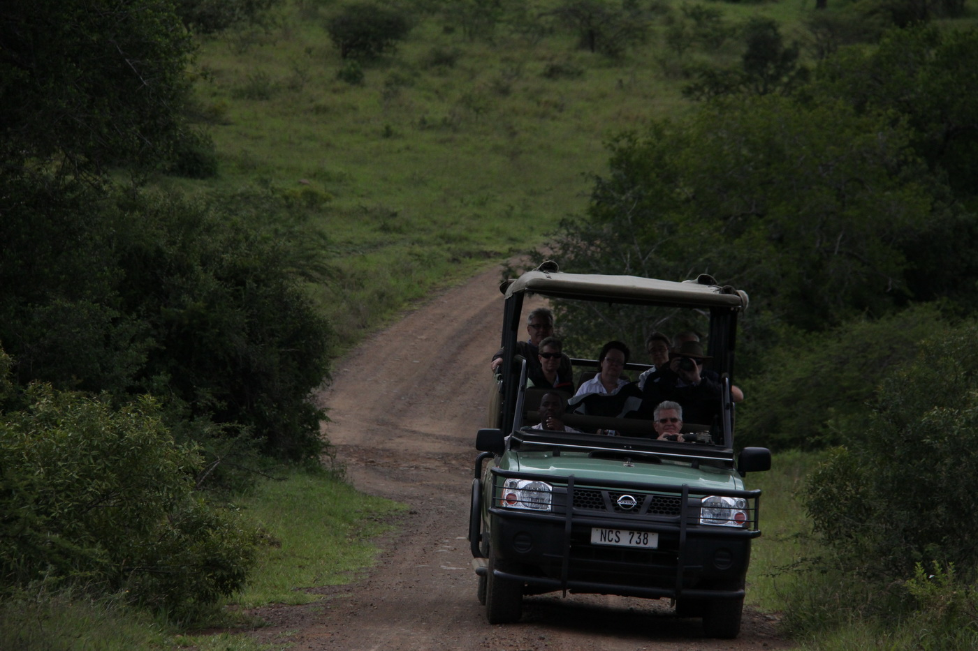 Guided Safari Drive