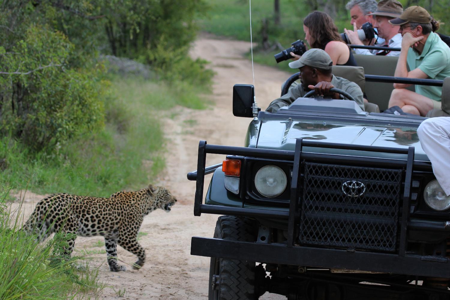 Leopard Encounter on Safari