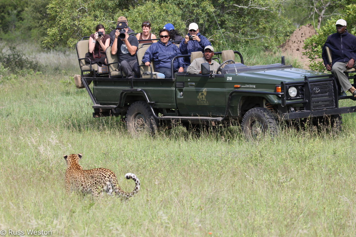Encountering Leopard on Safari