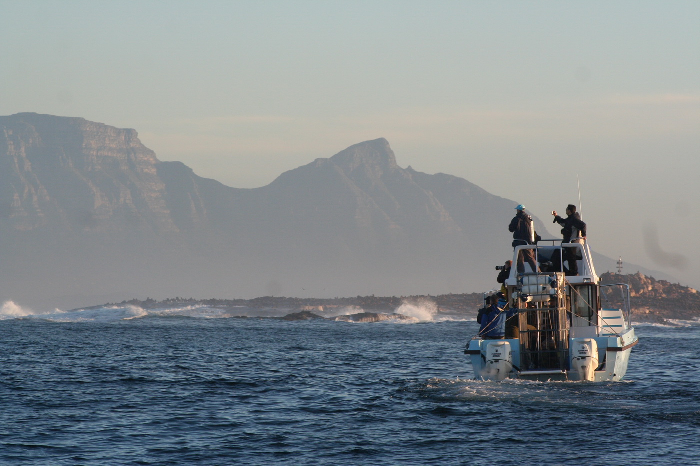 White Shark Observation Trips